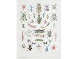 Entomology 2009 16x14in. cut currency/paper